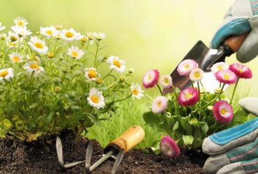Lavori di Giardinaggio, Manutenzione Giardini